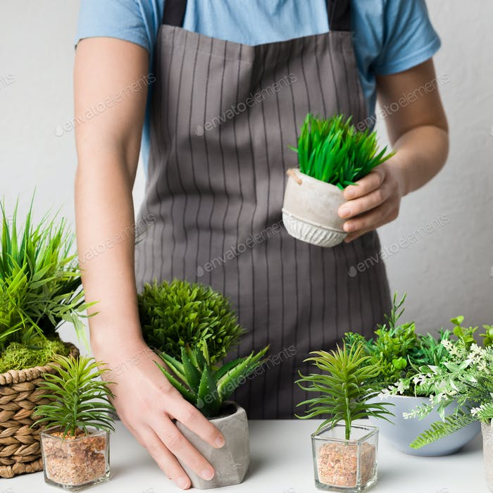 Florist putting potted plants on table, crop