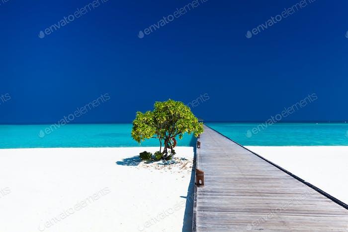 Hermosa Playa con embarcadero wodden y un solo Árbol en Maldivas