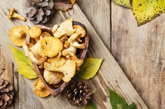 Forest mushrooms chanterelle in a bowl