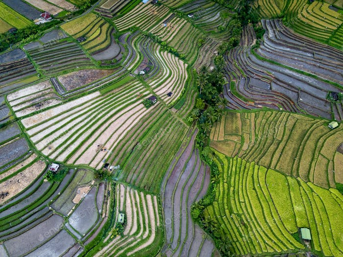 Aerial View Of Rice Terraces
