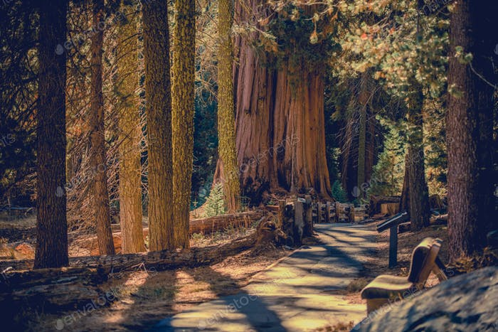 Szenischer Pathway-Trail des kalifornischen Sequoia-Nationalparks