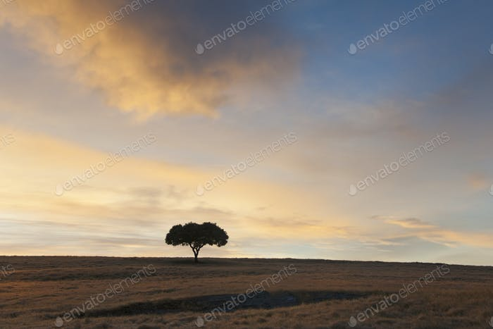 A single tree silhouetted on the skyline at sunset.