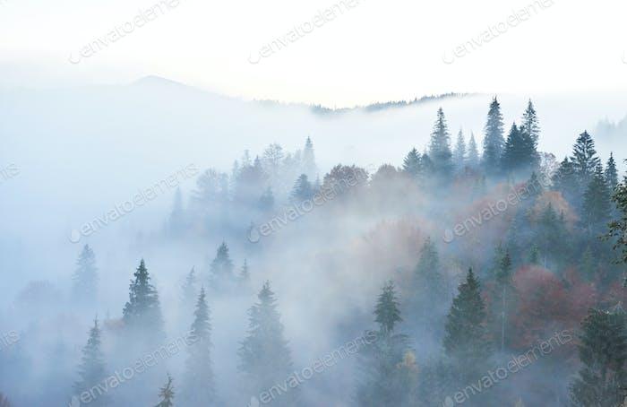 Fee Sonnenaufgang in der Berglandschaft des Waldes am Morgen. Der Nebel über dem majestätischen Pinienwald