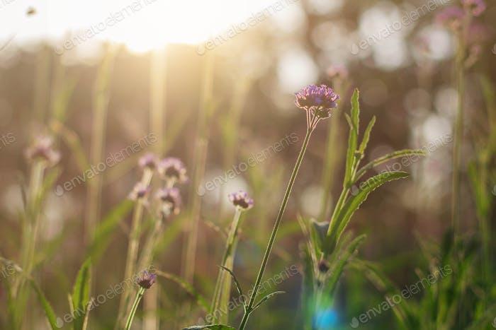 Blumen mit der Natur bei Sonnenlicht