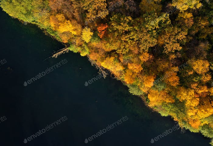 Aerial view of the lake and the bright yellow forest