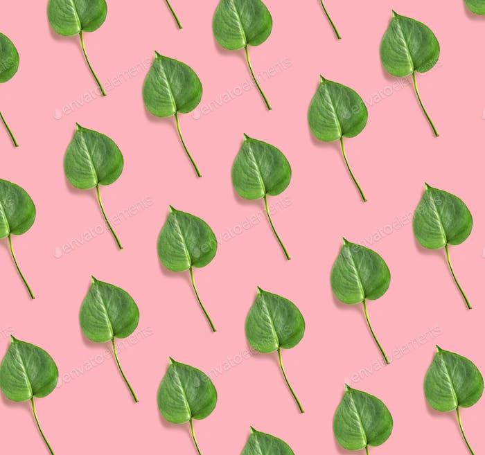 leaves of monstera plant
