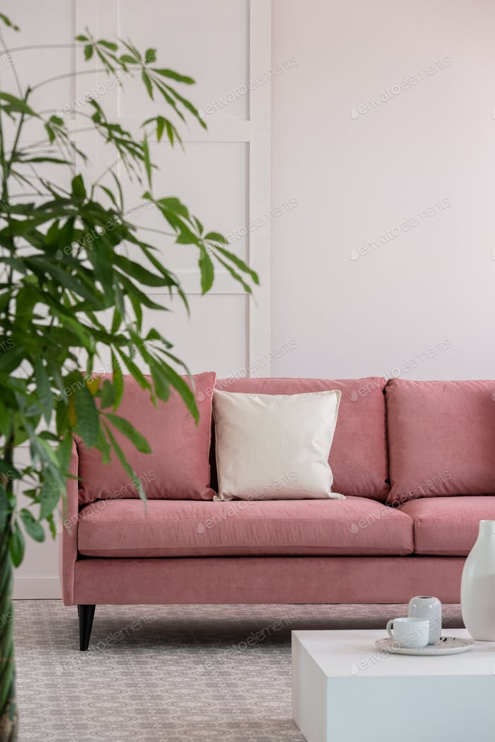 Big green plant in pot next to pastel pink sofa in white elegant interior