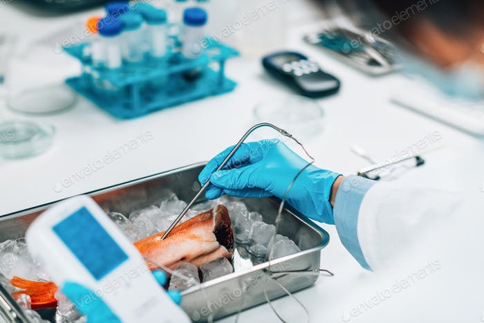 Heavy Metals Concentrations in Fish Meat