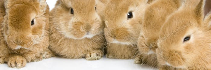 group of bunnies