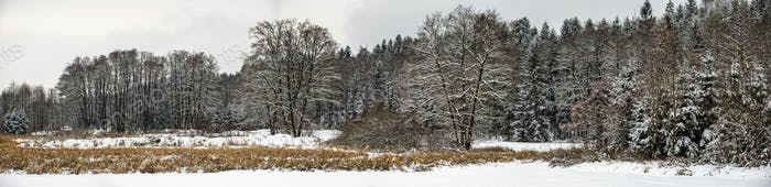 Panorama of the winter forest after first winter snow