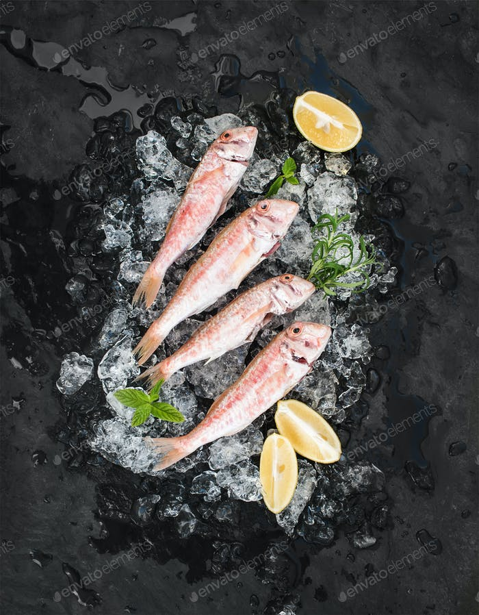 Raw Red Mullet fish with lemon, mint and rosemary on chipped ice over dark stone backdrop