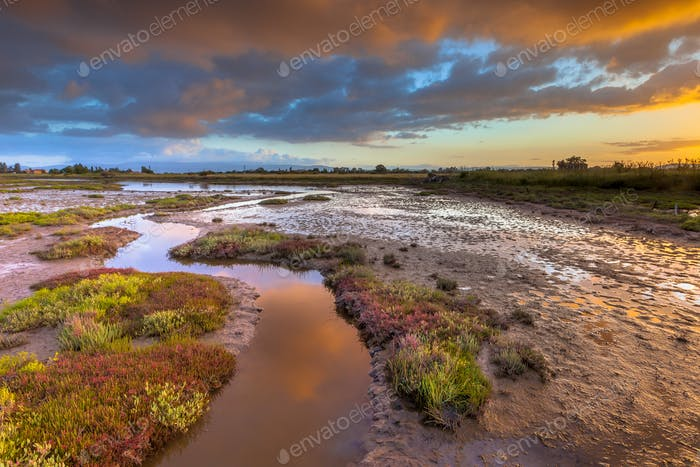 Sunrise over Salicornia Estuary