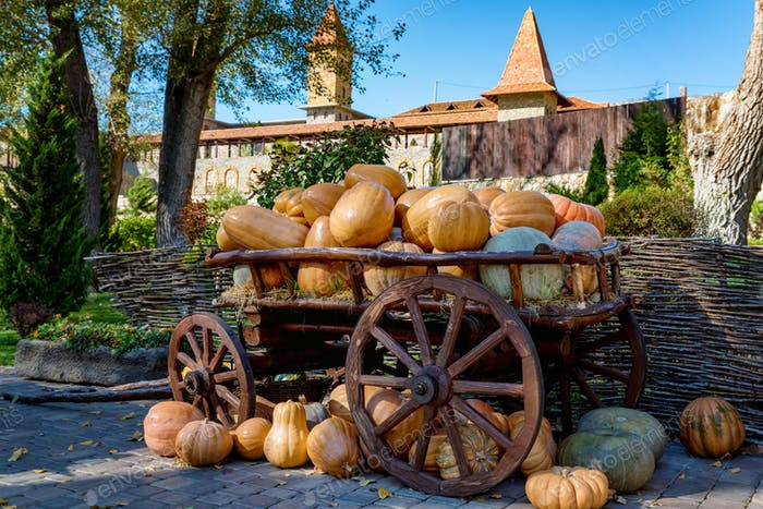 Decorative wooden cart full of pumpkins outdoors. Halloween or Thanksgiving