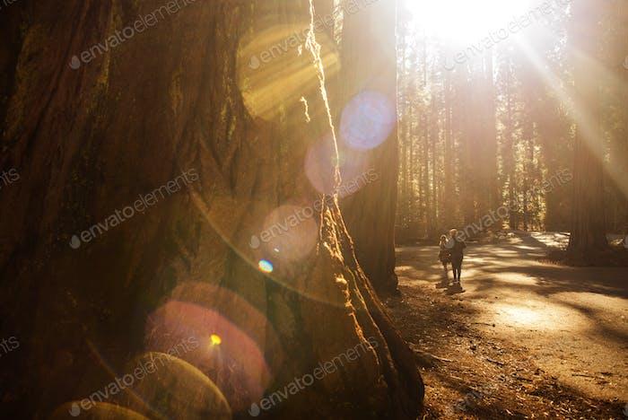 Exploring Sequoia Park