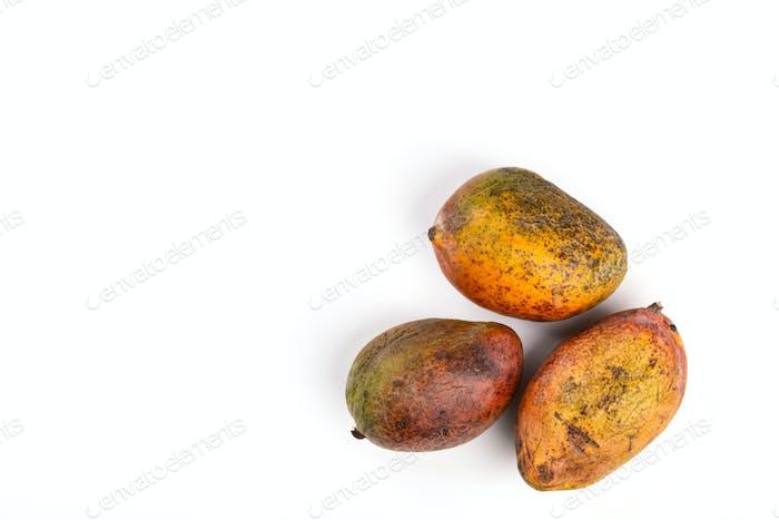 Rotten mango. Overripe Fruit on a white background.Isolated