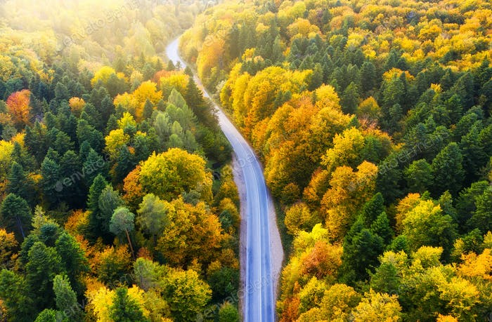 Aerial view on the forest road. Autumn forest from air during sunset.