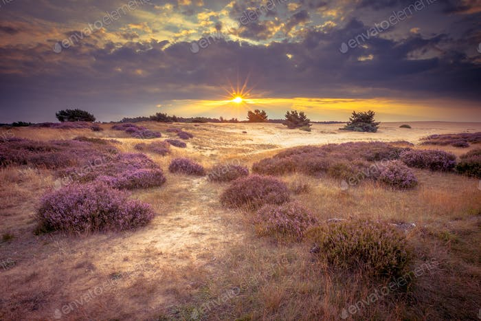 Hoge Veluwe Sand Heathland in retro colors