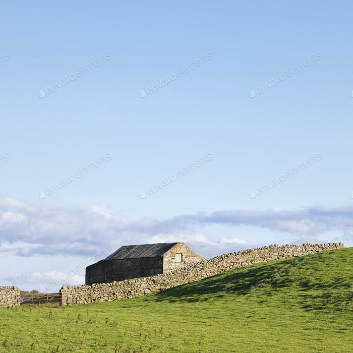 49026,Barn and dry stone wall, Wensleydale, Yorkshire Dales National Park, England