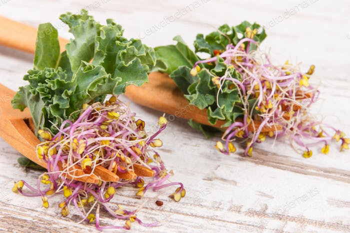 Fresh kale sprouts and leaves of vegetable with wooden fork