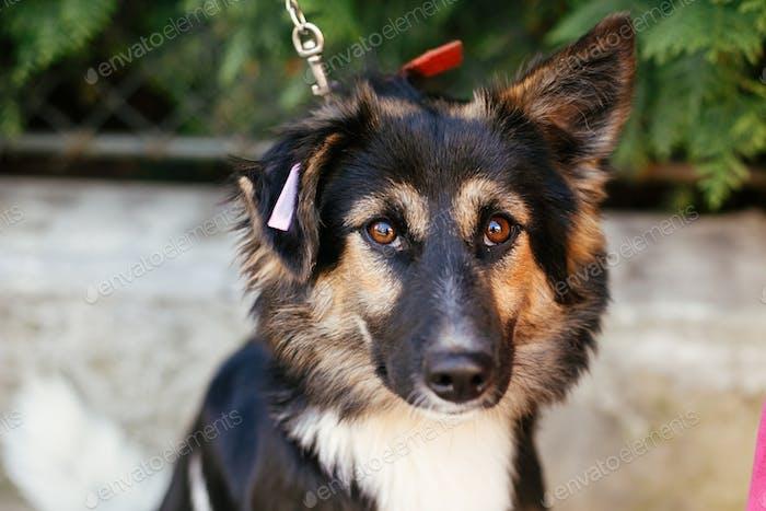 Süßer flauschiger Hund zu Fuß mit Freiwilligen im Sommertag im Park