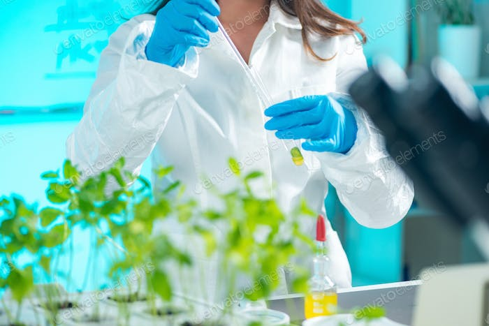 Biologist doing experiments with plants