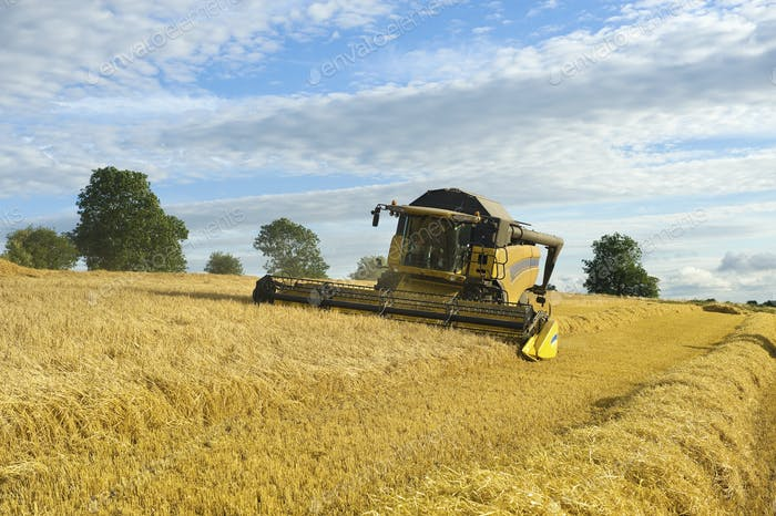 Ein Mähdrescher in einem Feld, schneidet ein Feld von Mais.