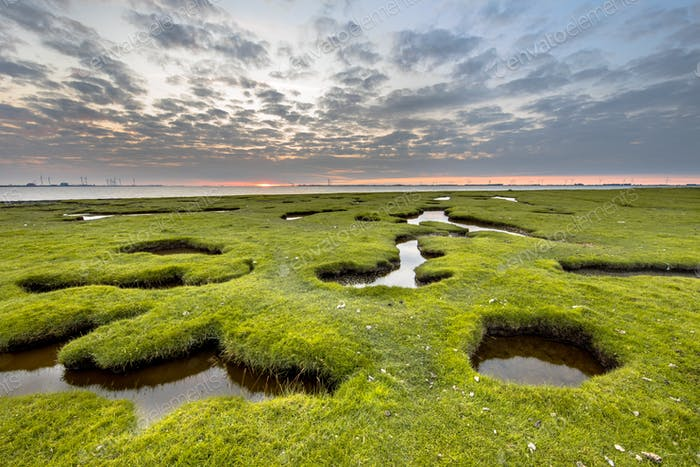 Erosion holes in Tidal grassland of Dollard