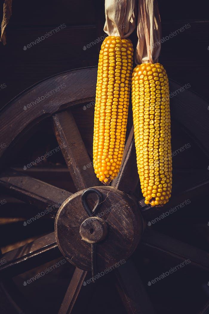 Hängende Mais auf einem Vintage-Wagenrad. Stillleben