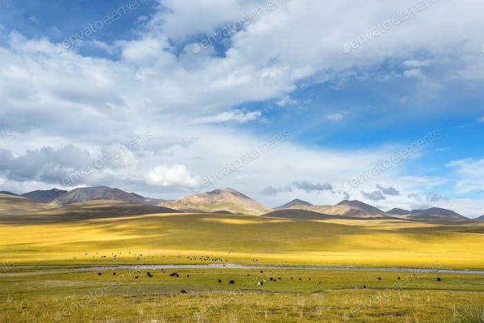 beautiful grassland scenery