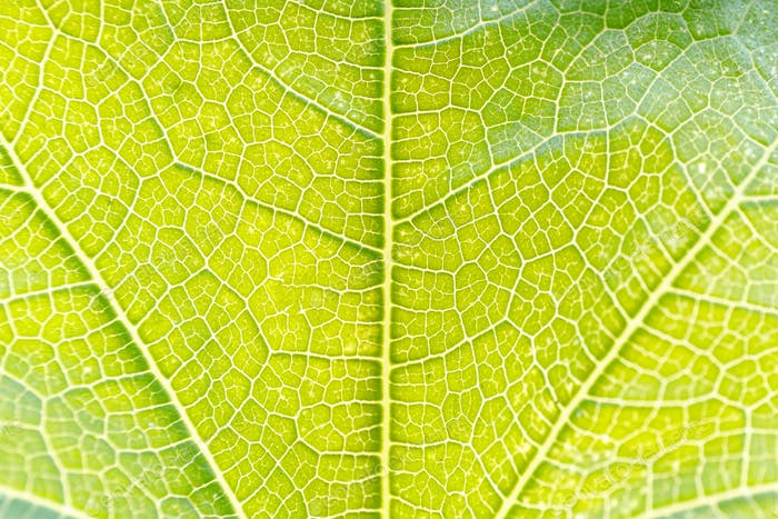 Close up of green leaf. Macro photography.