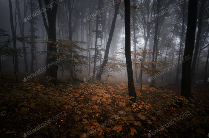 Enchanted autumn woods with orange leaves and fog
