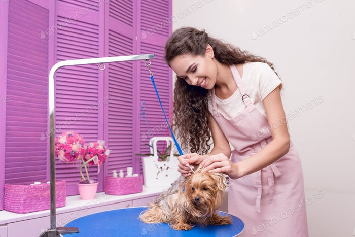 smiling young woman in apron grooming adorable lap dog in pet salon