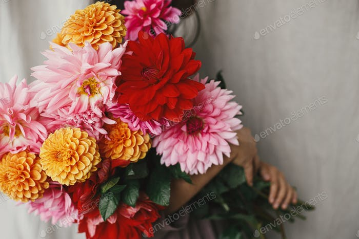 Colorful dahlias in woman hands in rustic room. Florist in linen dress hiding behind flowers