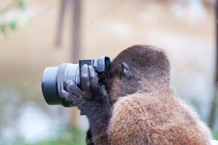 Monkey Taking a Picture
