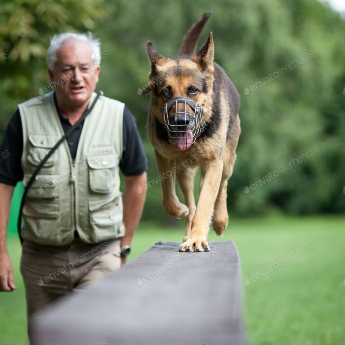 Master and his obedient (German shepherd) dog at a dog training