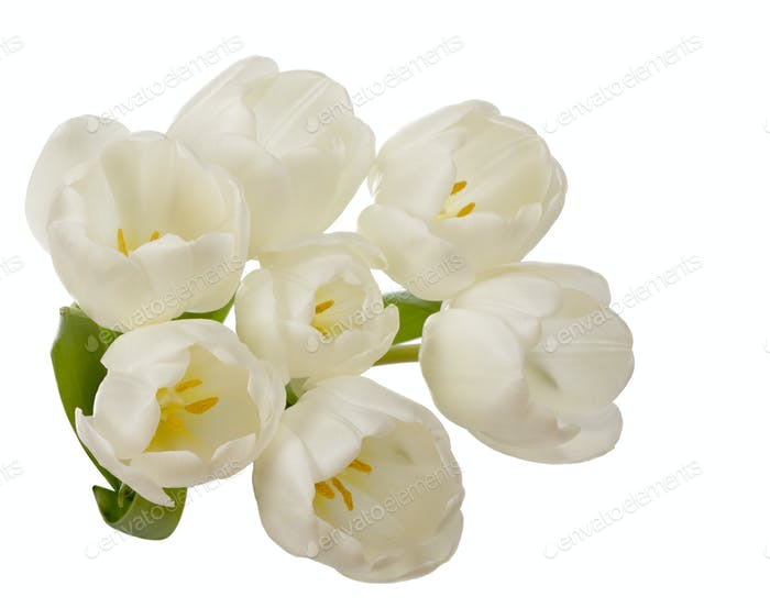 White tulip flowers bouquet