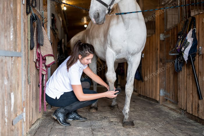Young female carer in casualwear cleaning hoof of white purebred racehorse
