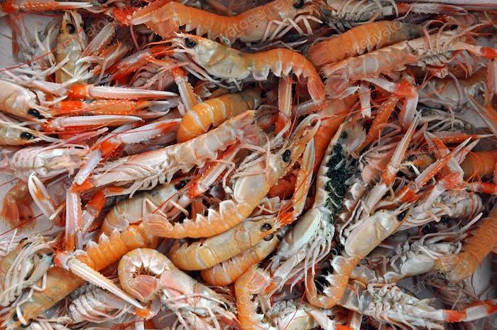 Thumbnail for Orange fresh shrimp on fish market