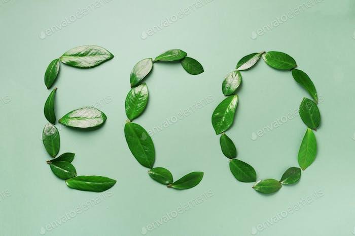Word Eco aus Blättern auf grünem Hintergrund. Draufsicht. Flache Lag. Ökologie, umweltfreundlicher Planet und