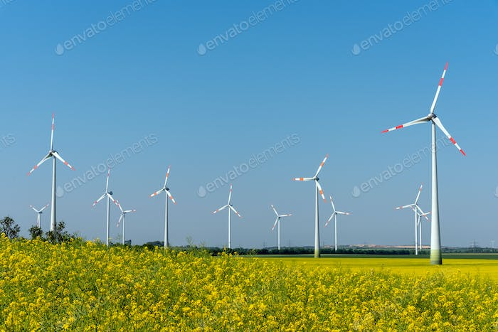 Yellow blossoming oilseed rape and some wind energy plants
