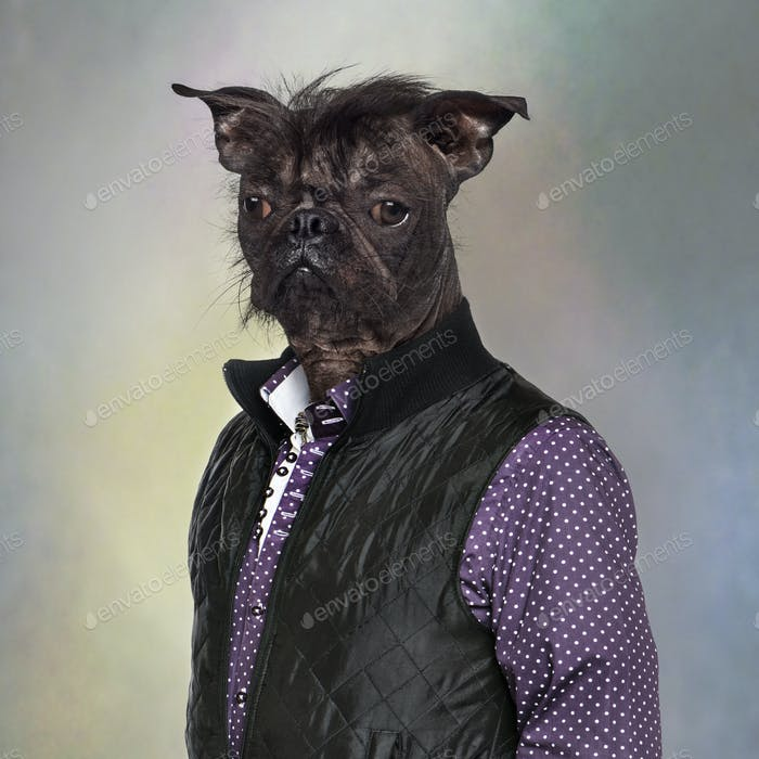 Hairless dog wearing a shirt and a jacket, colored background