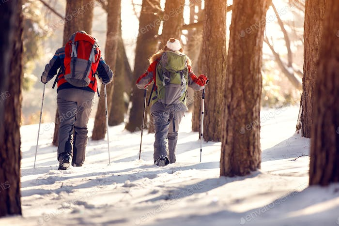 Mountaineers with backpacks in wood