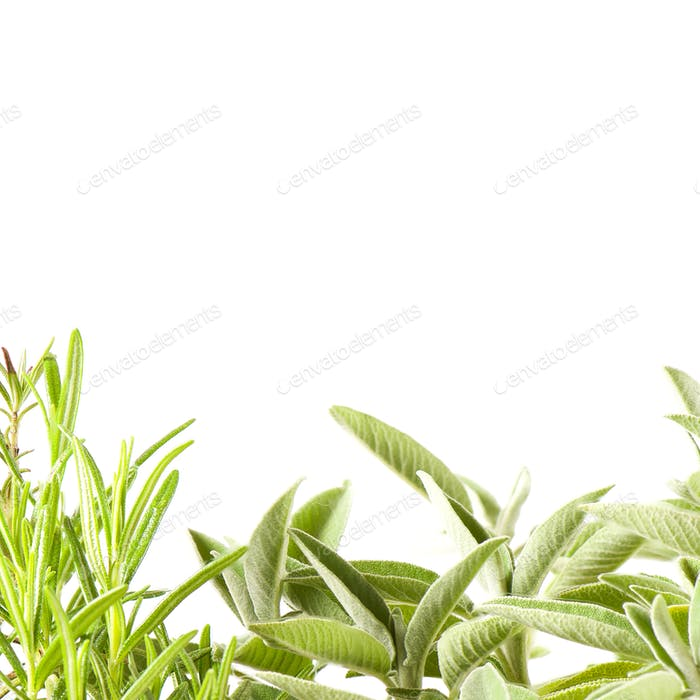 Sage and rosemary