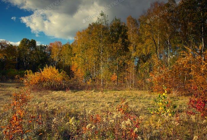 Wald und Wiese am sonnigen Herbsttag