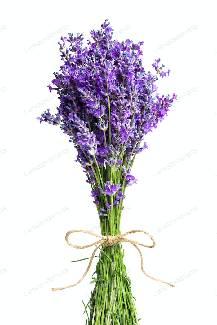 Lavender flowers on white background. Close up