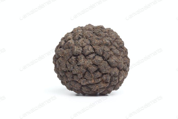 Whole single fresh winter trufflle mushroom