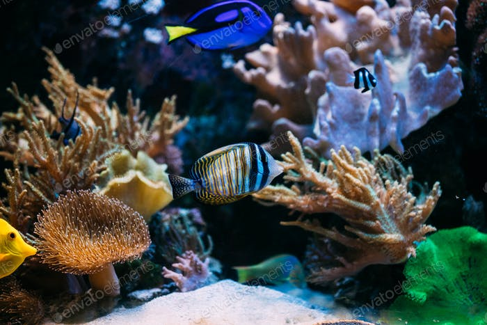 Colorful sea fish in aquarium