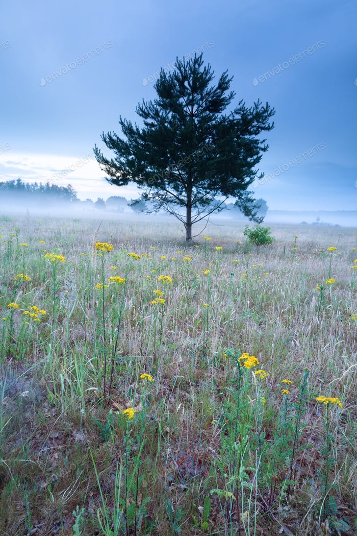 yellow flowers on hill during misty morning