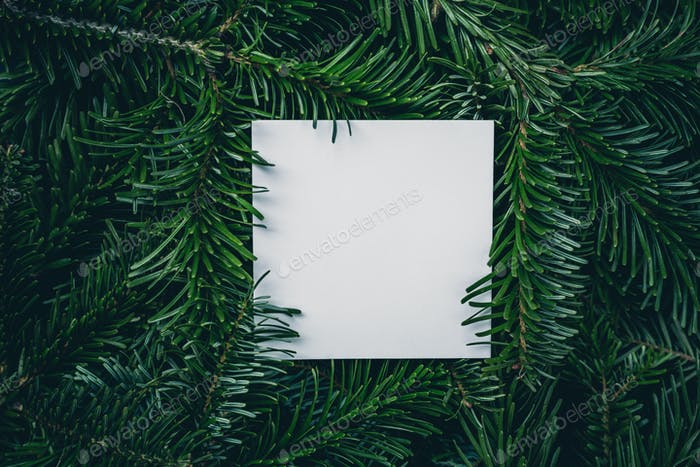 Christmas card note on green spruce tree branches background