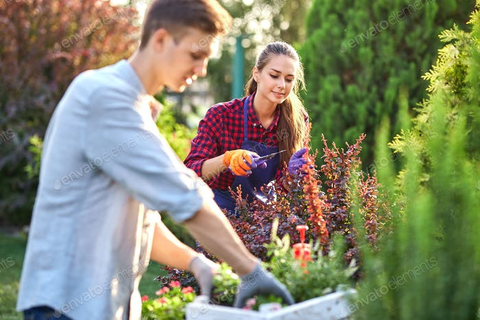 Young guy gardener in garden gloves puts the pots with seedlings in the white wooden box on the